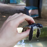 海龟保护—科斯格达
